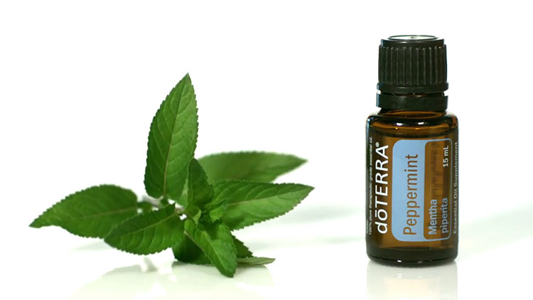 Use doTERRA Peppermint Essential Oil to help manage low blood pressure naturally