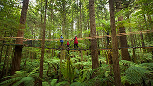 Treewalk in the Redwoods Forest in Rotorua, New Zealand. Copyright: Tourism Media.