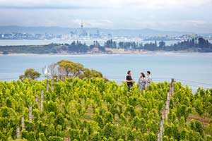 View through the vineyards on Waiheke Island with Auckland City in the distance. Copyright: Miles Holden